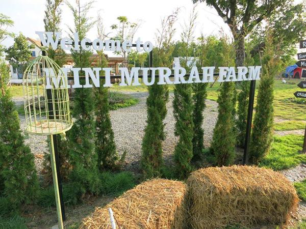 murah-farm-5