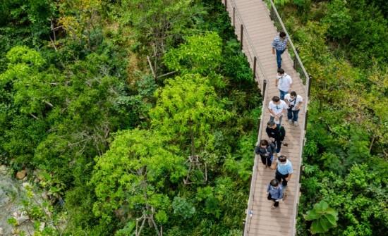 forest-ptt-bkk-5-e1458703808963