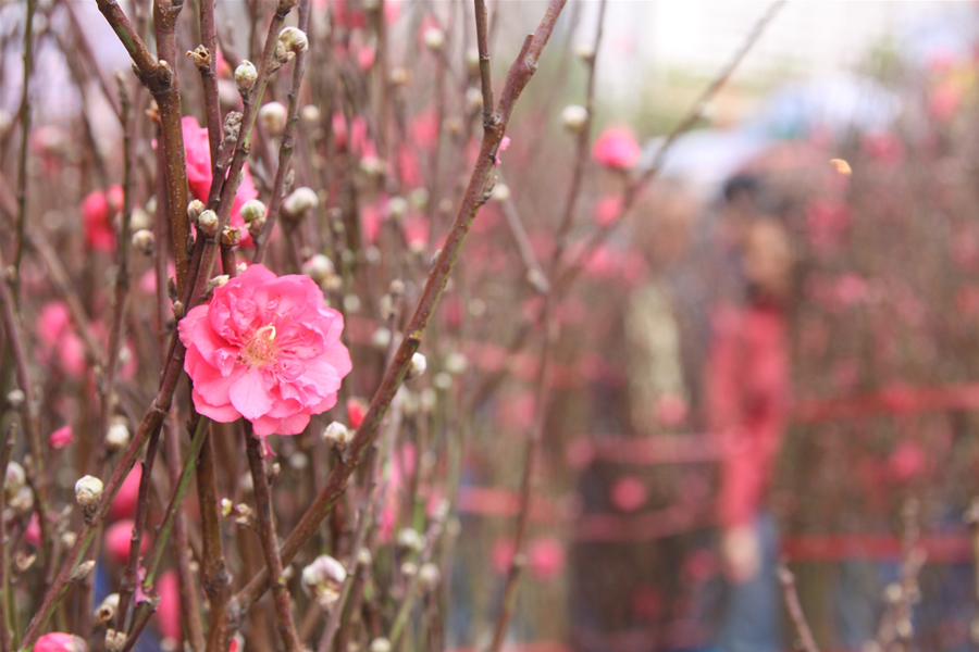 Flower-Markets-Peach-Blossoms